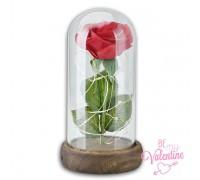 Вечна роза, за вечна любов в стъкленица